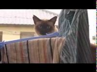 Watch this cat video all the way through... I PROMISE you'll laugh so hard!!! The music is perfect!!!