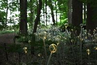 British artist and lighting designer Bruce Munro recently opened an outdoor exhibition at Pennsylvania's Longwood Gardens entitled Light. Throughout 23-acres, there were both indoor and outdoor installations, including six large-scale outdoor instal...