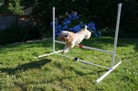 Agility course DIY