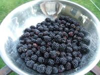 Baked jam? Great website with homesteading advice!