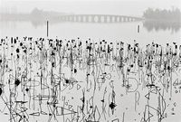 Wilted Lotus Blossoms, former Summer Palace, Kunming Lake, Beijing, China photo by René Burri, 1964