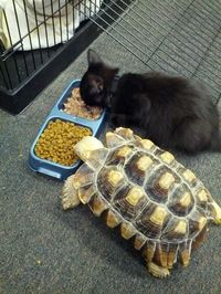 Sharing is caring. Turtle and Cat
