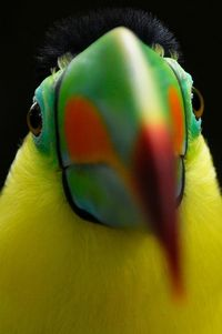 Brilliantly coloured parrot.