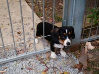 Puppy stuck in the fence