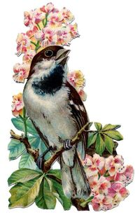 Weaver sparrow vintage graphic