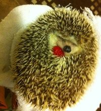 hedgehog, your so cute!